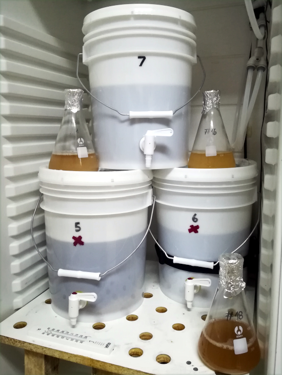 Landrace Yeasts Fermentation