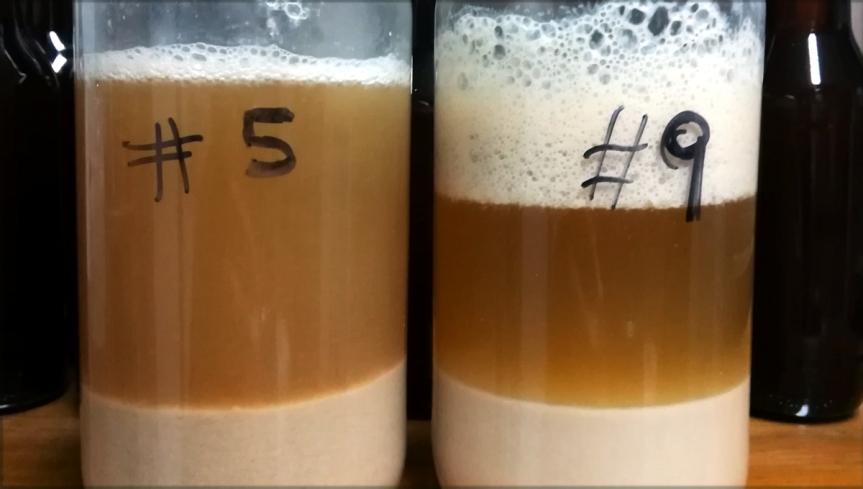Cerveza de Prueba | Batch № 48 Landrace Yeast Test#1
